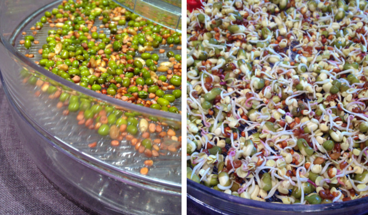 Sprouting beans and seeds